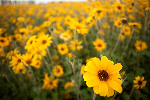 wildflowers outside of San Miguel de Allende